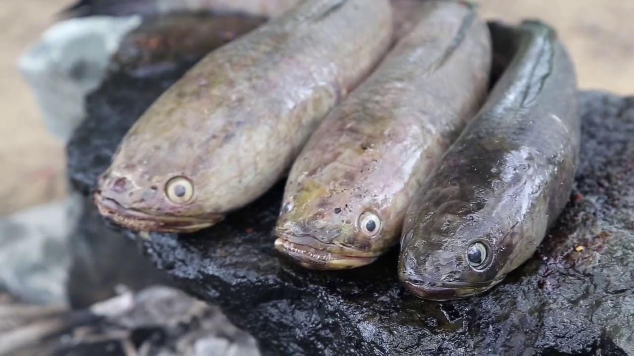 İlkel Yöntemlerle Doğada Taş Üstünde Balık Pişirip Yemek - Doğada Yaşam