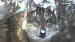 WOLF-SONG
