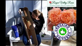 🌹 What are Rose Bands? //  Rogue Valley Roses Unboxing Series Review #4