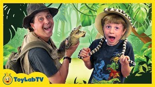 Giant Alligators at Kids Wildlife Park with Toy Hunt for Surprise Crocodile Toys from ToyLabTV