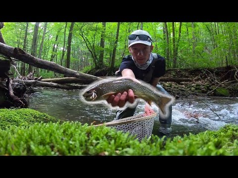 BIG NATIVE BROOK TROUT ON DRY FLIES