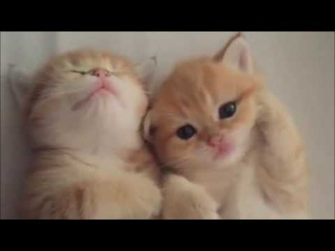 Newborn Kittens Latest Video Compilation | Latest Cute New Born Kittens Videos Compilation