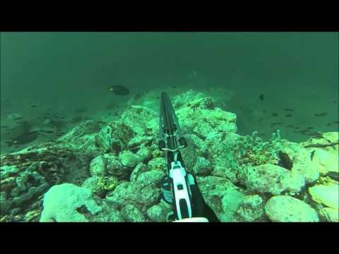 Chasse sous-marine - Carpe rouge (10Kg), Isla Primos