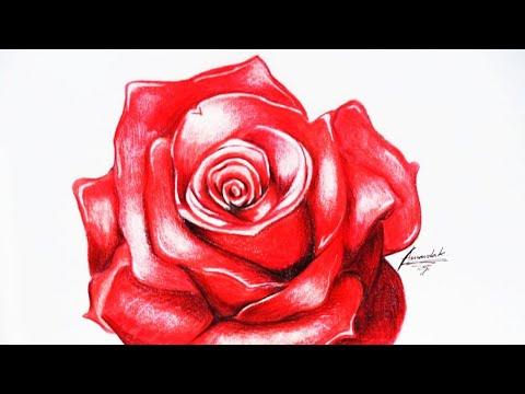 Desenhando Uma Rosa Vermelha Desenho Acelerado Drawing A Rose
