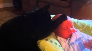 תינוקות וחתולים