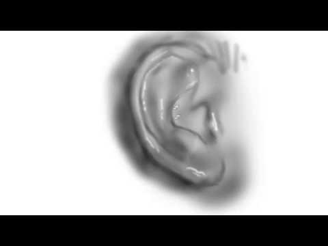 Draw the Human Ear