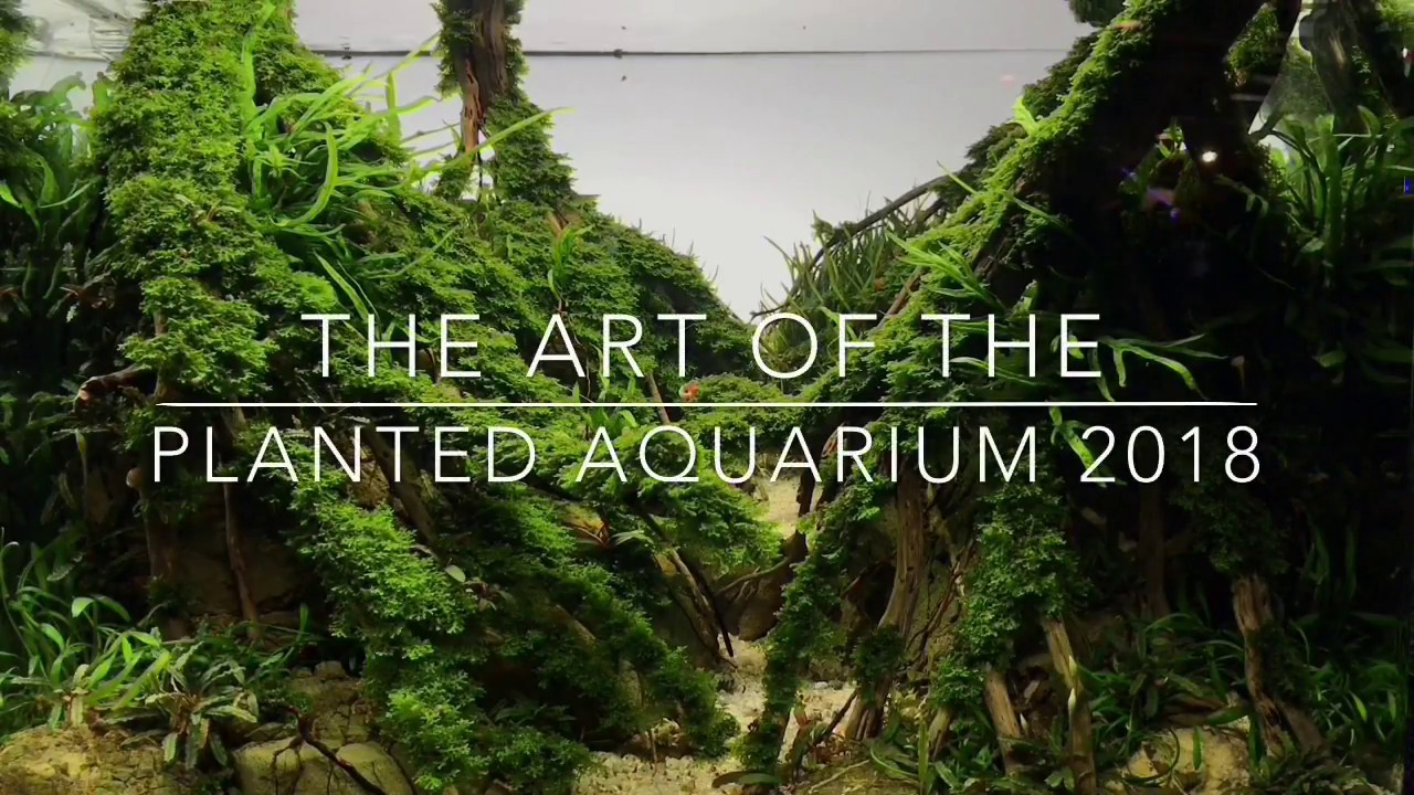 Aquascaping Contest — The Art of the Planted Aquarium 2018 ...