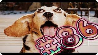Приколы с животными №86   Собаки чихают  Смешные животные  Animal videos
