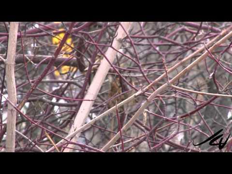 birds wintering birds to explore preschoolers
