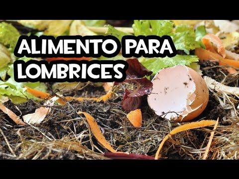 El Mejor Alimento Para Lombrices Huerto Organico Youtube