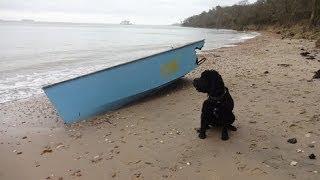 Woodside Bay - Isle Of Wight - Cockapoo Dog Walk