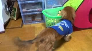 とれろ~おもちゃ。 Marroppy's! http://members.jcom.home.ne.jp/ka-c...