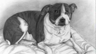 Tia Bull Terrier Pencil Drawing.avi