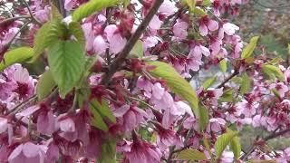 小樽朝里川に花咲く!現代美術に親しむアート展画像