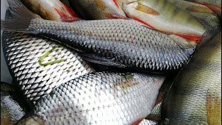 НА ЛОДКЕ ПО МАЛОЙ РЕКЕ Рыбалка на поплавок 2020