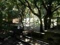 Utazás a Szlajka-völgyi kisvasúton Szilvásváradon a Halastótól a Fátyol-vízesésig
