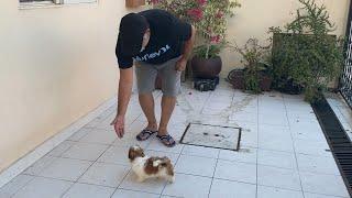 El PRIMER ENTRENAMIENTO de un perro  CACHORRO   La Casita de los Shih Tzu