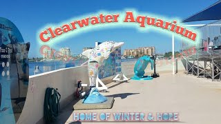 Clearwater Marine Aquarium home of Winter & Hope from Dolphin Tale I & II