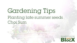 Gardening Tips - Planting Late Summer Seeds - Choi Sum