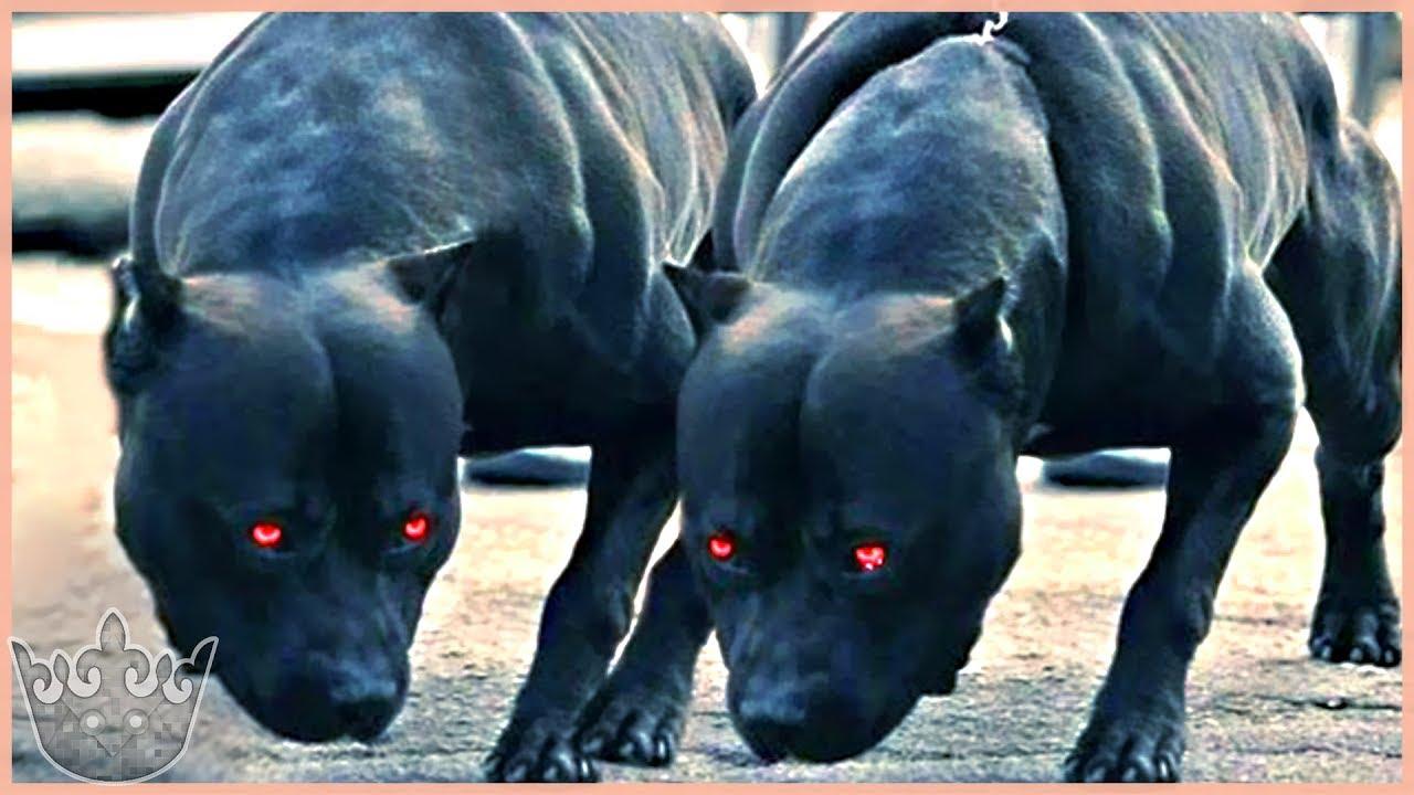 Los 10 mejores perros guardianes del mundo que debes conocer cuanto antes youtube - Los mejores ambientadores para el hogar ...