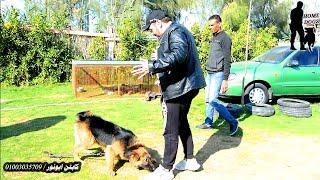 نجم مصر #ياسر_رماح دا كان رد فعله بعد ما شاف كلبه بعد فتره التدريب