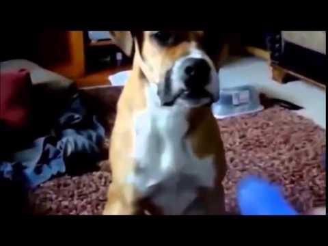 Humor de perro vol 1