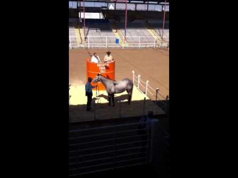 Angola Prison Horse Sale