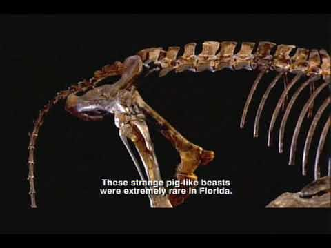 Oligocene Epoch - Florida Fossils: Evolution of Life and Land