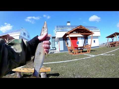 Https://www.youtube.com/watchv=PWkTKr_XsXY разловить новую палочку