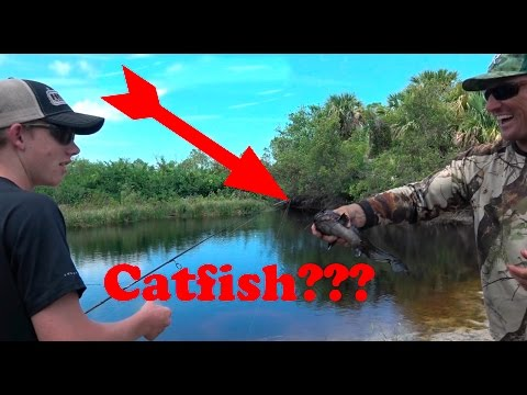 UN-identified Catfish!!! What is this??? Catch Clean and Cook!