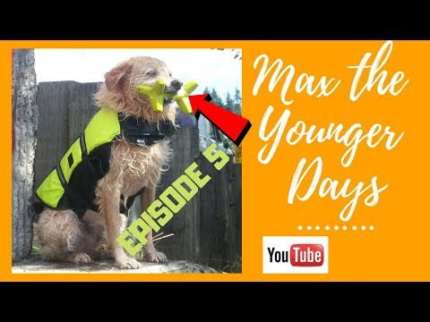 Max the younger days Ep5 MaxTV DogTV Learn more about Max