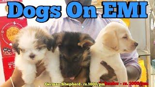 Pets on EMI in Delhi || buy any pets on EMI || pk pet shop