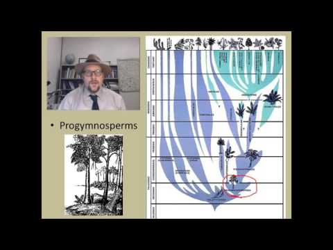 How did the first seed plants (the Gymnosperms) evolve?