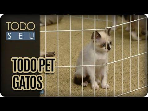 Origem Das Raças Dos Gatos | Todo Pet - Todo Seu (28/11/17)