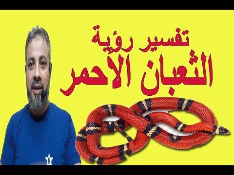 تفسير رؤية حلم الثعبان الأحمر في المنام اسماعيل الجعبيري Youtube