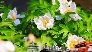 Video 《地理中国》 20180215 山河春色·花满神州 | CCTV科教 download MP3, 3GP, MP4, WEBM, AVI, FLV Oktober 2018