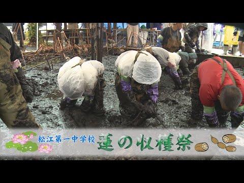 松江第一中学校 蓮の収穫祭