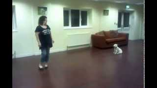 Dog Obedience Training - Recall
