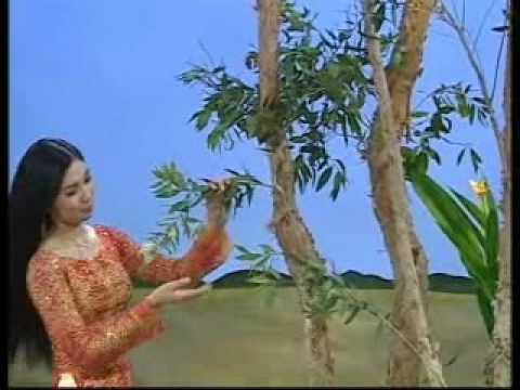 Ca cổ: Hương tràm-Như Quỳnh