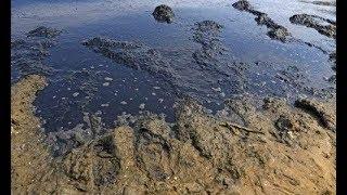 Азовське море зникне. Нас чекає катастрофа! Науковець зробив гучну заяву thumbnail