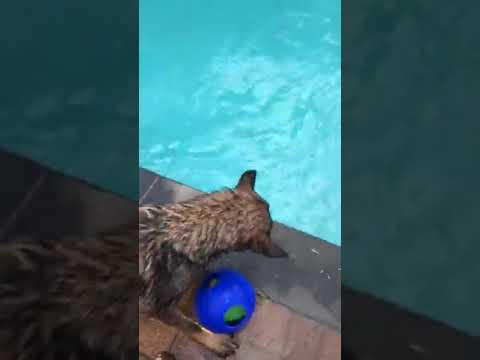 Dogs Swimming with Kids   Dogs and Kids Playing in the Pool