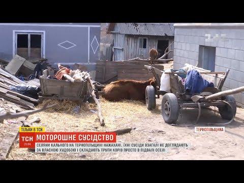 Сім'я на Тернопільщині