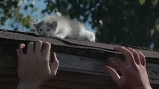 Коты против зомби / Видео