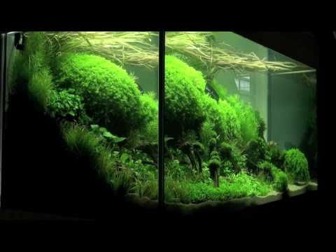 Aquascaping Aquarium Ideas From The Art Of The Planted