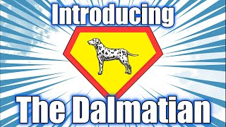 Dalmatian 101  An Introduction To The Dog Breed
