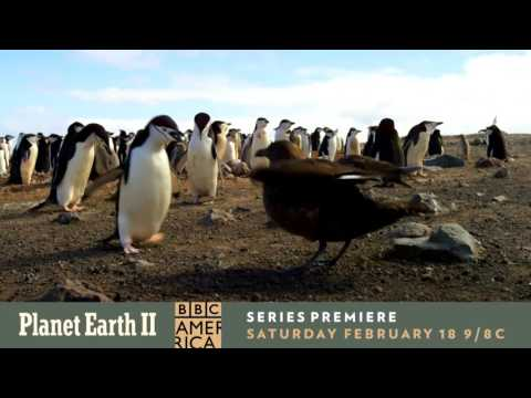 A Part of Something Greater | Planet Earth II | Premieres Feb 18th @ 9/8c
