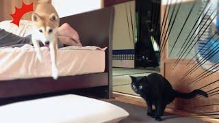 見えない何かに後ずさる猫と追い討ちをかける犬 a cat reacting to something invisible