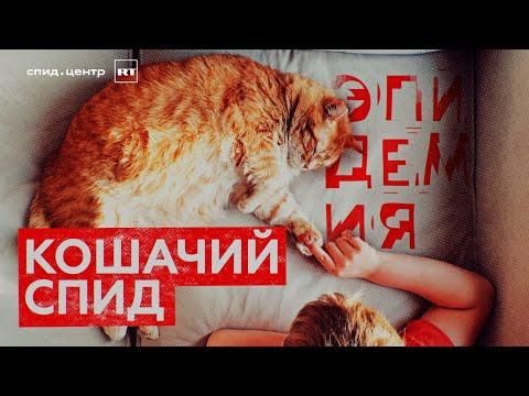 «Кошачий СПИД» /
