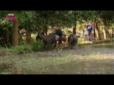 Water Buffalo Racing - Last Woman Standing - BBC Three