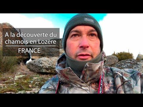 Le chamois en Lozère - FRANCE - Wildlife photographer Benoit Lagambas